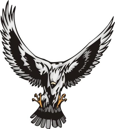 a large bird of prey: Aquila con le grandi ali bianche. Uccelli predatori. illustrazione - versioni di colore bianco e nero. Vettoriali