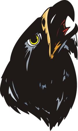 black plumage: Head of a sea eagle with black plumage. Predatory birds.  illustration - color   bw versions. Illustration