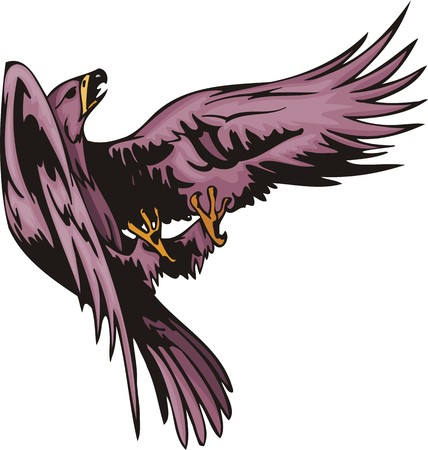 ominous: The eagle with violet plumage has entered fight. Predatory birds.  illustration - color   bw versions. Illustration