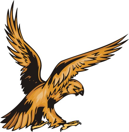 bird of prey: The eagle with yellow plumage waves wings. Predatory birds.   illustration - color   bw versions.