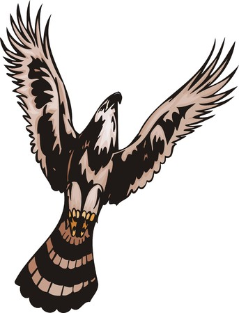 The eagle with brown plumage soars in the sky. Predatory birds. illustration - color   bw versions. Vector