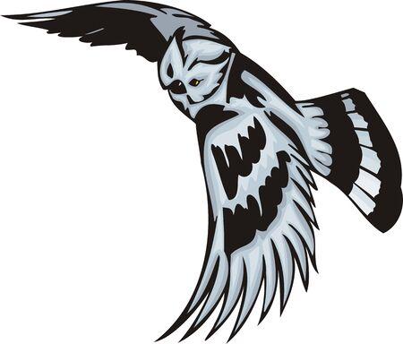 agression: La Chouette avec un plumage blanc donne � cette fin. Oiseaux pr�dateurs.   Illustration - versions de couleur noir et blanc.
