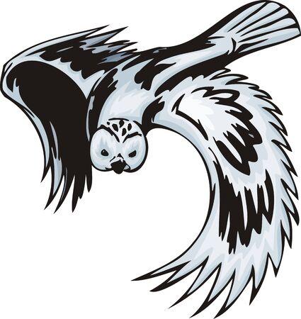 piume: Il gufo con piumaggio bianco sta per attaccare. Uccelli predatori.   illustrazione - versioni di colore bianco e nero.