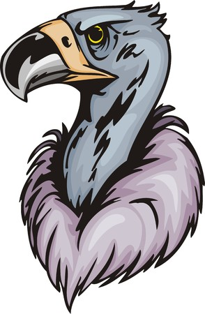 Head of a griffin-scavenger with the big bill. Predatory birds.  illustration - color   bw versions. Vector