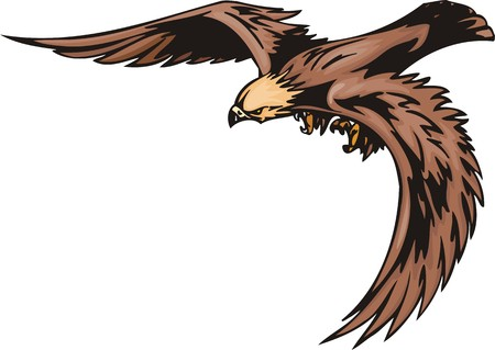 bird of prey: The eagle with brown plumage looks out for extraction. Predatory birds. illustration - color   bw versions. Illustration