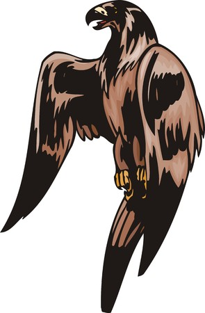 The big eagle with a brown coloration. Predatory birds.   illustration - color   bw versions. Vector