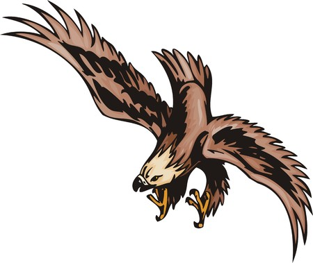 angry sky: The eagle with brown plumage attacks extraction. Predatory birds.  illustration - color   bw versions.