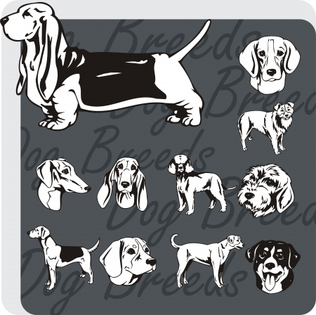 basset: Razas de perros - vinilo-lista del vector