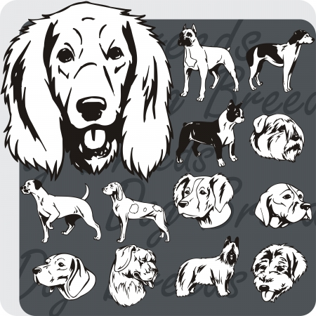 basset hound: Dog breeds - vinyl-ready vector illustration