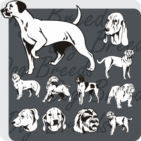 Dog breeds - vinyl-ready vector illustration Stock Vector - 21990494