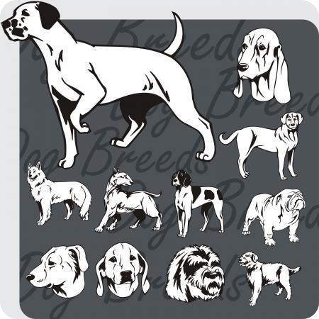 hounds: Dog breeds - vinyl-ready vector illustration