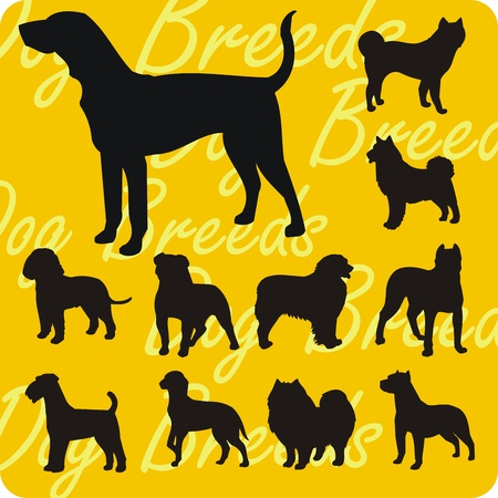 Dog breeds - vinyl-ready vector illustration Vector