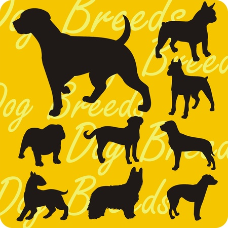 newfoundland: Dog breeds - vinyl-ready vector illustration