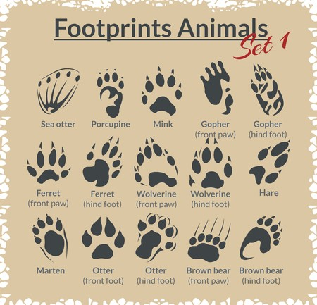 marten: Footprints Animals - vector set - stock illustration.