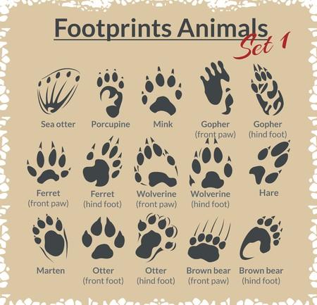 Footprints Animals - vector set - stock illustration.