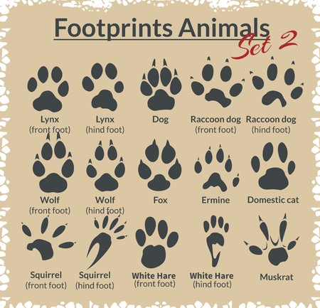 paws: Footprints Animals - vector set - stock illustration.