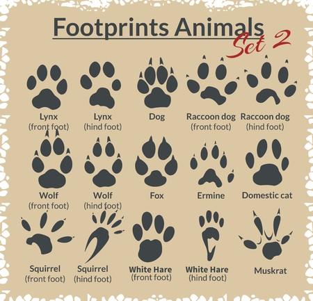 lince: Huellas animales - vector conjunto - ilustración.