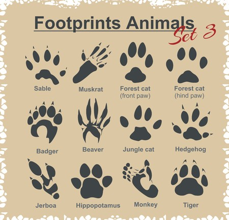 Footprints Animals - vector set. 免版税图像 - 36001713