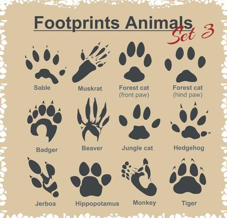 castor: Huellas animales - vector conjunto.