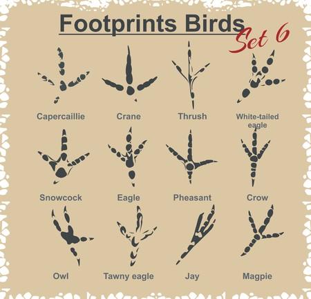 vogelspuren: Footprints Vögel - Vektor gesetzt.