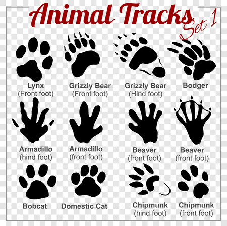 badger: Animals Tracks - vector set - stock illustration.
