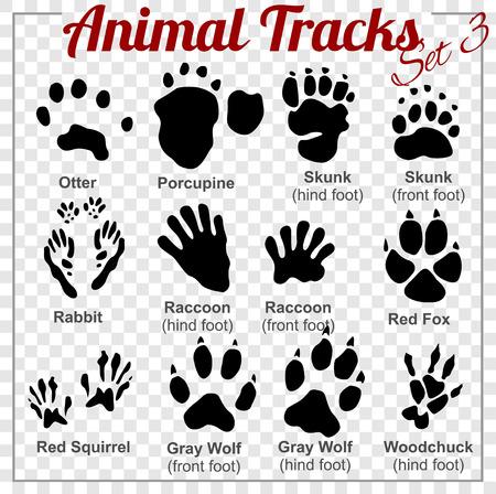 zorrillo: Animales Tracks - conjunto de vectores - ilustración.