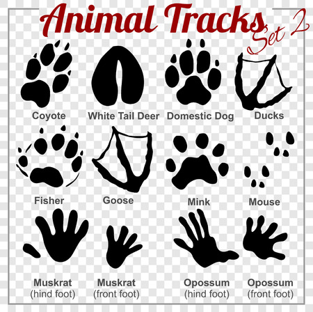 mink: Animals Tracks - vector set - stock illustration.
