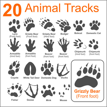 foot print: 20 Animals Tracks on white background- vector set - vector stock illustration.