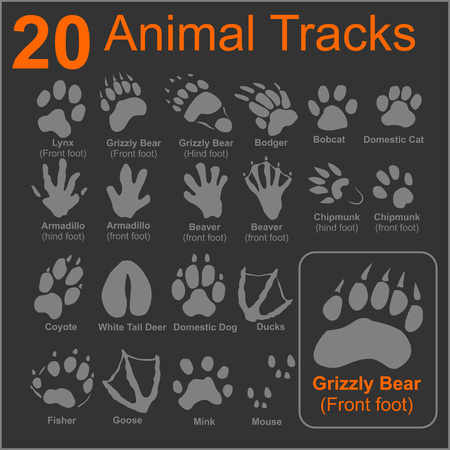 mink: 20 Animals Tracks on dark background - vector set - vector stock illustration.