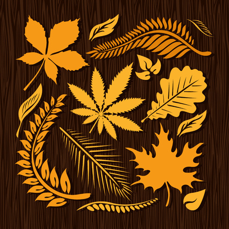 chokeberry: Autumn leaves collection on wooden dark background.