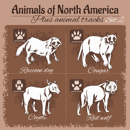 animal tracks: North America animals and animal tracks, footprints. Vector set.  Vectores