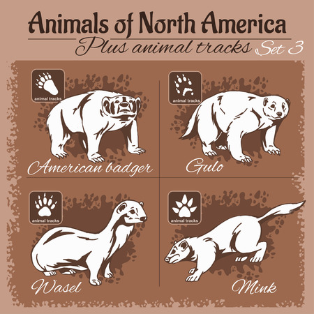 animal tracks: North America animals and animal tracks, footprints. Vector set.