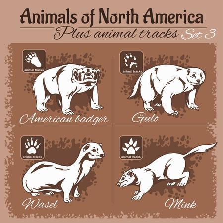 mink: North America animals and animal tracks, footprints. Vector set.