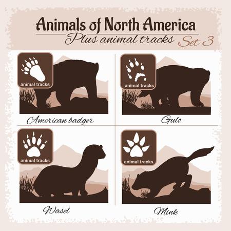 huellas de animales: animales América del Norte y huellas de animales, huellas. set vector. Vectores