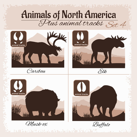 wild animal: North America animals and animal tracks, footprints. Vector set.
