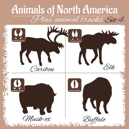 animal tracks: animales América del Norte y huellas de animales, huellas. set vector. Vectores