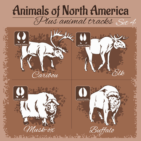 animal fauna: North America animals and animal tracks, footprints. Vector set.