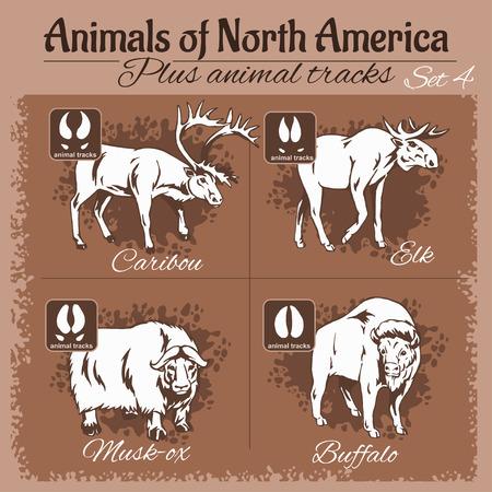 tracks: North America animals and animal tracks, footprints. Vector set.