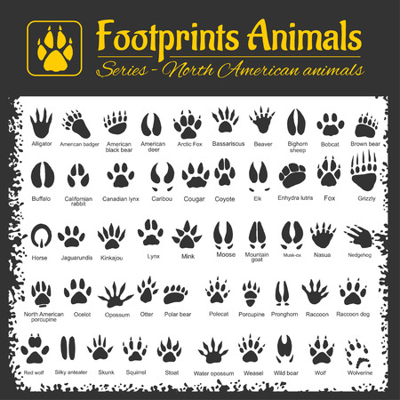 feet in water: Animals Tracks - North American animals - vector set