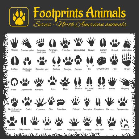 possum: Animals Tracks - North American animals - vector set