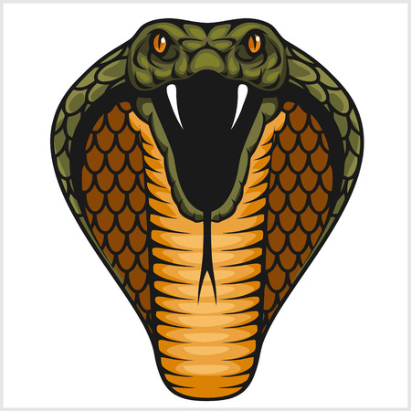 Cobra head - color illustration