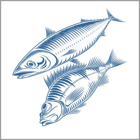 mackerel: Fish set - sea bass, mackerel vector illustration.