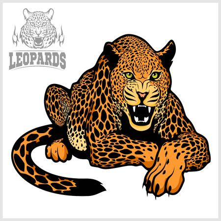 Leopard - vector  illustration isolated on white