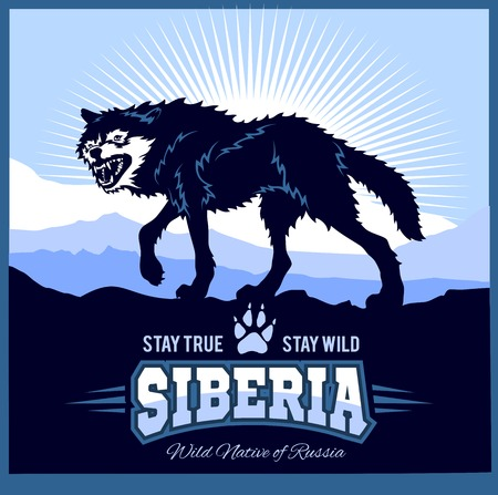 Siberia wolf on the background of the plain of Russian Siberia