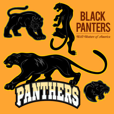 Black Panthers - vector set isoled Vector Illustration