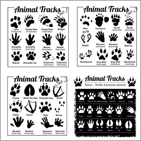 Huellas de animales - animales de América del Norte
