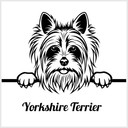 Yorkshire Terrier - Peeking Dogs - breed face head isolated on white