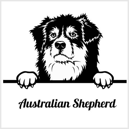 Australian Shepherd - Peeking Dogs - breed face head isolated on white Иллюстрация