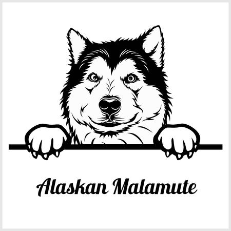 Alaskan Malamute - Peeking Dogs - breed face head isolated on white