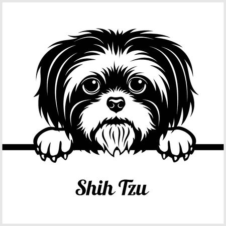 Shih Tzu - Spähende Hunde - - Rassengesichtskopf isoliert auf weiß